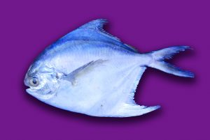 Read more about the article पापलेट (Pomfret)