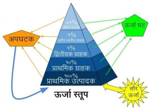 Read more about the article पारिस्थितिकीय स्तूप (Ecological pyramid)