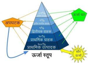 पारिस्थितिकीय स्तूप (Ecological pyramid)