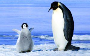 पेंग्विन (Penguin)