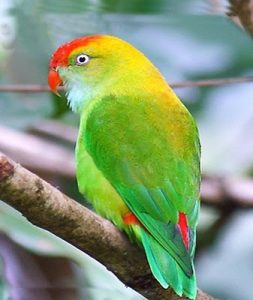 Read more about the article पोपट (Parrot)