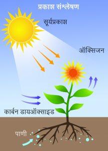 प्रकाशसंश्लेषण (Photosynthesis)