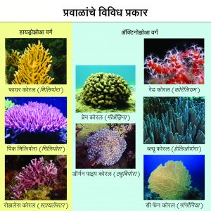 Read more about the article प्रवाळ (Coral)