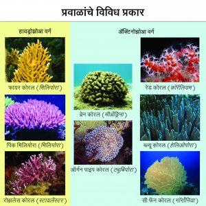 प्रवाळ (Coral)