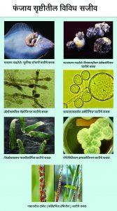 फंजाय सृष्टी (Fungi kingdom)