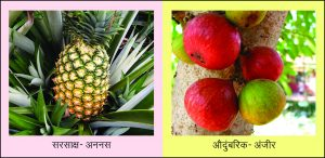 Read more about the article फळ (Fruit)
