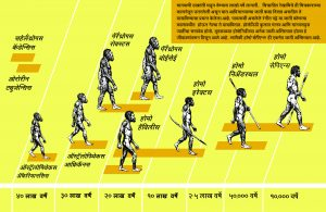 Read more about the article मानवाची उत्क्रांती (Evolution of Man)