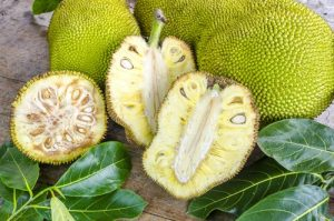 फणस (Jackfruit tree)