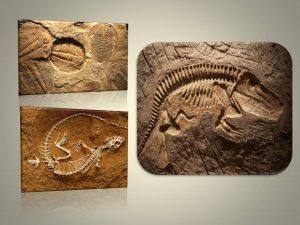 पुराजीवविज्ञान (Paleontology)