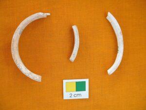 पुरातत्त्वीय संशोधन आणि शंखशिंपले (Archaeomalacology)