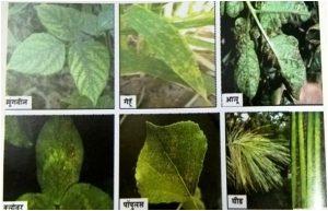ओझोन आणि वनस्पती (Ozone and Plants)