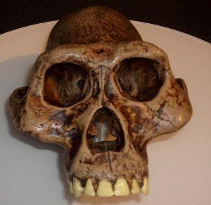 ऑस्ट्रॅलोपिथेकस (Australopithecus)