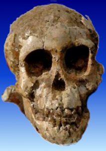 डिकिका बालक (Dikika baby) Selam (Australopithecus)