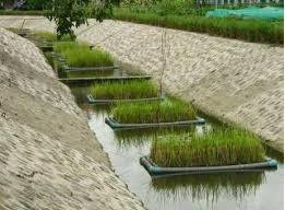जलशुद्धीसाठी वनस्पतींचा उपयोग (Phytoremediation of Water)