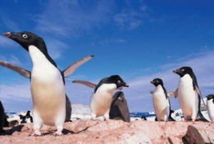 अंटार्क्टिका (Antarctica)