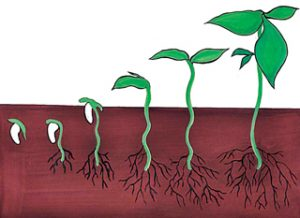 Read more about the article अंकुरण (Germination)