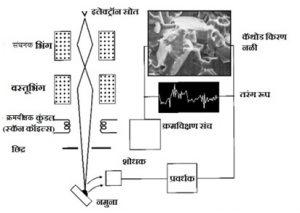 Read more about the article क्रमवीक्षक इलेक्ट्रॉन सूक्ष्मदर्शक (Scanning Electron Microscope [SEM])
