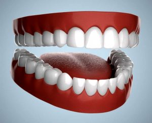 Read more about the article मानवी दात (Human Teeth)