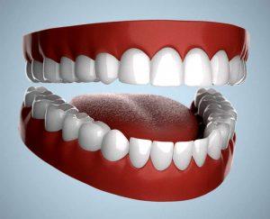 मानवी दात (Human Teeth)