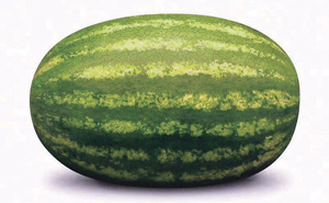 कलिंगड (Watermelon)