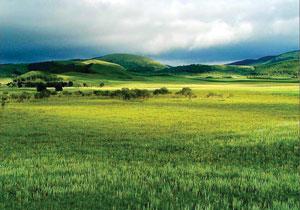 गवताळ भूमी परिसंस्था (Grass land ecosystems)
