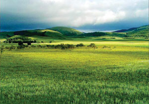 Read more about the article गवताळ भूमी परिसंस्था (Grass land ecosystems)