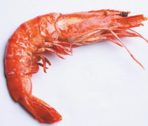 चिंगाटी (Shrimp)