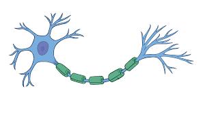 चेतासंस्था (Nervous system)