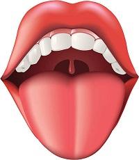जीभ (Tongue)