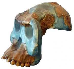 ऑस्ट्रॅलोपिथेकस गार्ही (Australopithecus garhi)