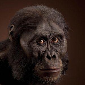 ऑस्ट्रॅलोपिथेकस आफ्रिकानस (Australopithecus africanus)