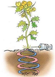 जनुकीय अभियांत्रिकी (Genetic engineering)