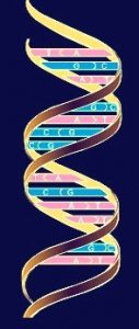 जनुकीय संकेत (Genetic code)