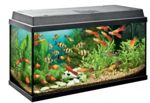 Read more about the article जलजीवालय (Aquarium)