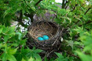 घरटे (Nest)