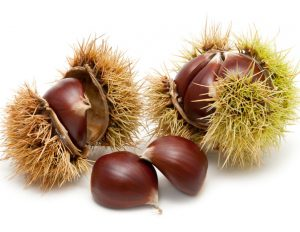 चेस्टनट (Chestnut)