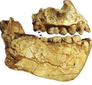 ऑस्ट्रॅलोपिथेकस डेअिरेमेडा (Australopithecus deyiremeda)