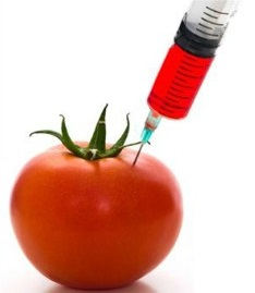 जनुकीय परिवर्तित पिके (Genetically modified crops)