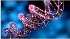 जीनोम (Genome)