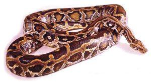 अजगर (Python)
