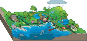 Read more about the article जलोत्सारण व्यवस्थापन (Watershed management)