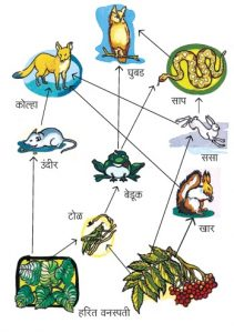 Read more about the article अन्नजाळे (Food web)