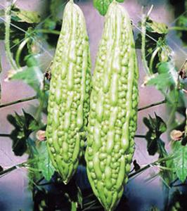 कारले (Bitter gourd)
