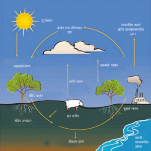 कार्बन चक्र (Carbon cycle)