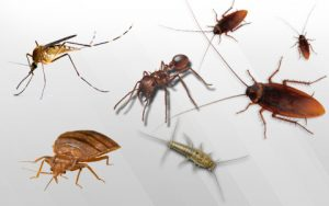 Read more about the article कीटक (Insect)