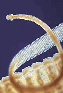 कृमी (Worm)