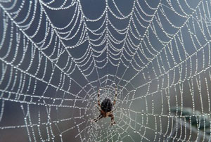 Read more about the article कोळी (Spider)