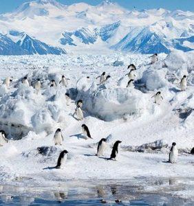 Read more about the article टंड्रा परिसंस्था (Tundra ecosystem)