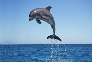 Read more about the article डॉल्फिन (Dolphin)