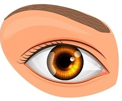 डोळा (Eye)